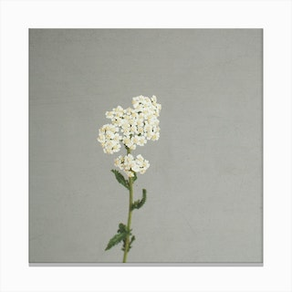 Solitary Flower Canvas Print
