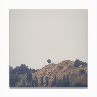 Tree On Top 1 Canvas Print