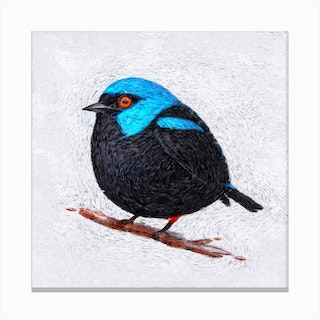 Winter Bird   Starry Effect Canvas Print
