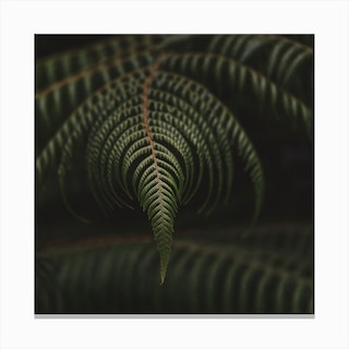 Fern 2 Canvas Print