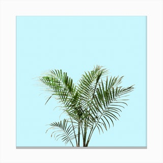 Palm Plant on Pastel Blue Wall Canvas Print