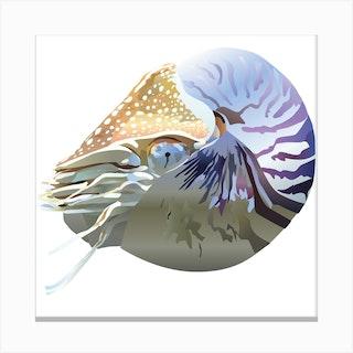 Nautilus 2 Canvas Print