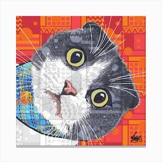 Kazuo Scottish Fold Cat Square Canvas Print