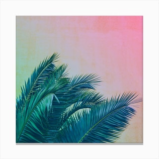 Palm III Canvas Print
