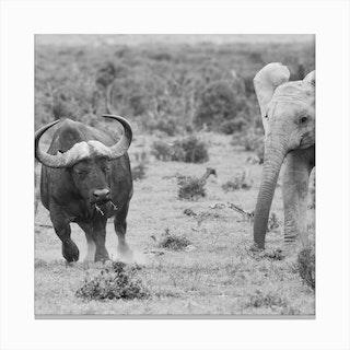 Elephant And Buffalo Canvas Print