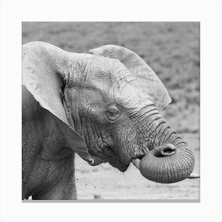 Dreaming Elephant Canvas Print