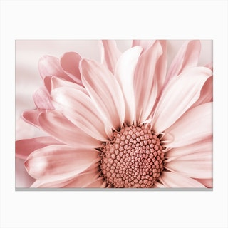 Blush Flower Canvas Print