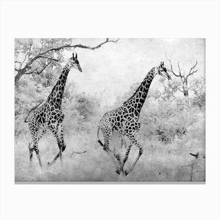 Giraffe Running Canvas Print
