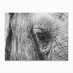 Elephant's Eye Canvas Print