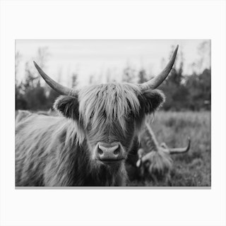 Highland Horse Black And White Canvas Print