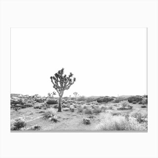 Joshua Tree Bw Canvas Print