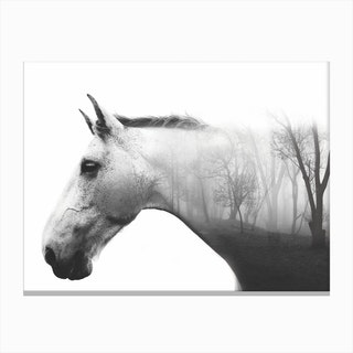 Forest Horse Canvas Print
