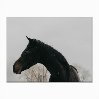 Horse And Snow Canvas Print