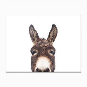 Hello Donkey 2 Canvas Print