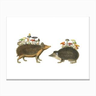 Hedgehogshrooms Canvas Print