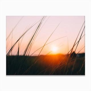 Cape Cod Meadow Canvas Print