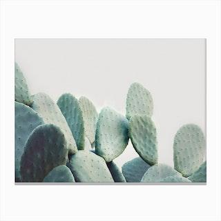Opuntia Cactus Canvas Print
