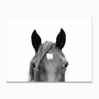 Peeking Horse Canvas Print