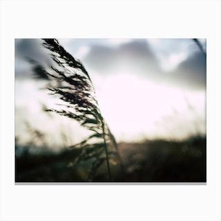 Reeds on the Beach 4 Canvas Print