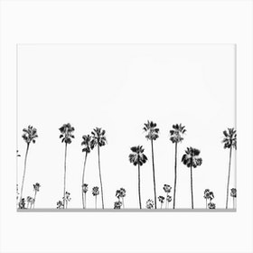 Palm Valley Canvas Print