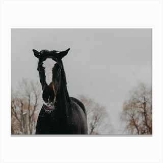 Horse And Snow 3 Canvas Print