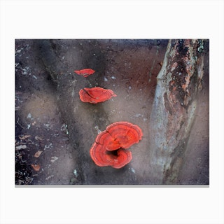 Red Mushrooms Canvas Print