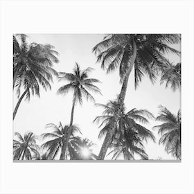 Palm Trees- Black and White Canvas Print