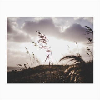 Reeds on the Beach 2 Canvas Print