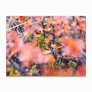 Colorful Twigs Canvas Print