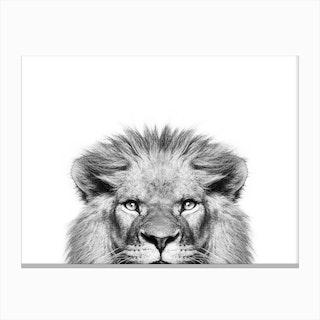 Peeking Lion Canvas Print