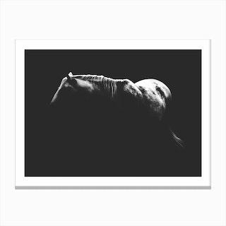 Shadow Horse Canvas Print