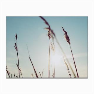 Reeds on the Beach 5 Canvas Print
