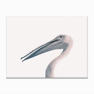 Toned Photograph Of A Pelican Canvas Print