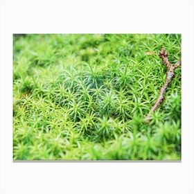 Forest of Moss Canvas Print