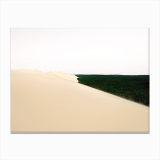 Desert Forest Canvas Print