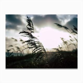 Reeds on the Beach 1 Canvas Print