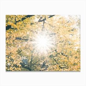 Fall I Canvas Print