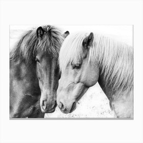 Horse Love Canvas Print