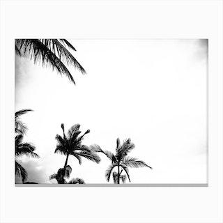 Palm Shade 4 Canvas Print