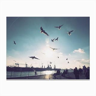 Seagulls at Hamburg Harbour 1 Canvas Print