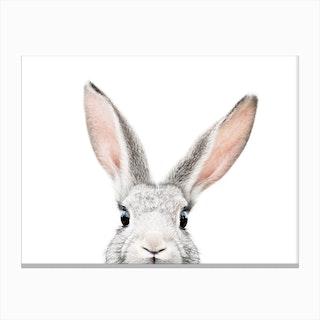 Peekaboo Bunny Canvas Print