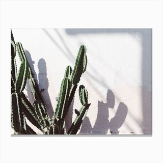 Californian Cactus Canvas Print