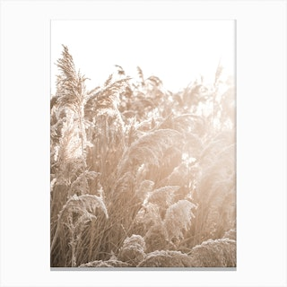 In The Reeds III Canvas Print