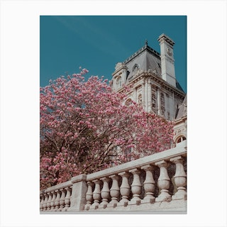 Pink Blossom In Paris Canvas Print