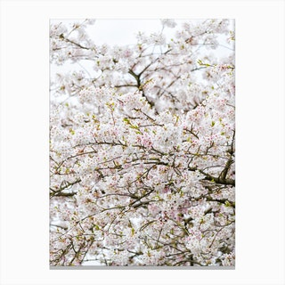 Blossom Tree 02 Canvas Print