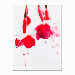 Red Plant II Canvas Print