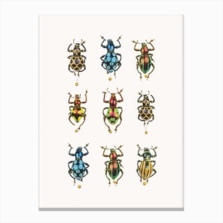 Insects V Canvas Print