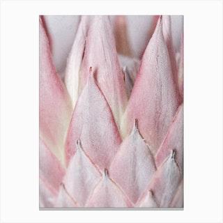 Details Of Blush Pink Protea Canvas Print