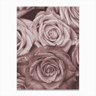 Vintage Style Roses Pink Canvas Print