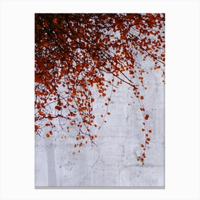 Wall of Tears Canvas Print